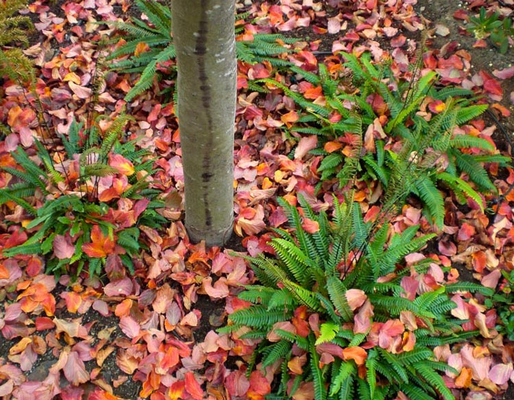 Deer Ferns in Autumn - Teal Designs